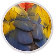 Macaw Parrot Plumes Round Beach Towel