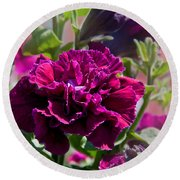 Maco Petunia Flower Double Burgundy Madness Art Prints Round Beach Towel