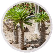 Madagascar Palms Round Beach Towel