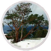 Madrone On Young Hill Round Beach Towel
