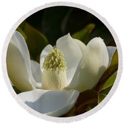 Magnificent Alabama Magnolia Blossom Round Beach Towel