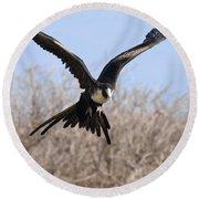 Magnificent Frigatebird  Round Beach Towel