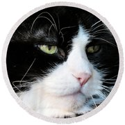 Maine Coon Face Round Beach Towel