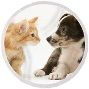 Maine Coon Kitten And Mongrel Dog Round Beach Towel