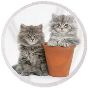 Maine Coon Kitttens Round Beach Towel