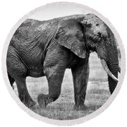 Majestic African Elephant Round Beach Towel