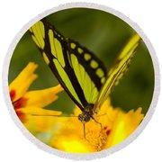 Malachite Butterfly On Flower Round Beach Towel