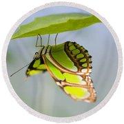 Malachite Butterfly On Leaf Round Beach Towel