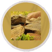 Male American Redstart On The Rocks Round Beach Towel