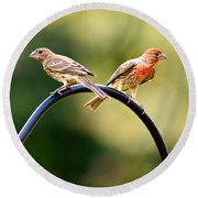 Male And Female House Finch Round Beach Towel