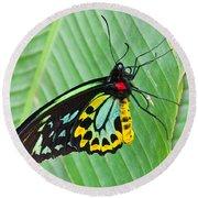 Male Cairns-birdwing Butterfly Round Beach Towel