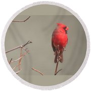 Male Cardinal On A Branch Round Beach Towel