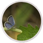 Male Eastern Tailed Blue Butterfly 3063 Round Beach Towel
