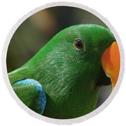 Male Eclectus Parrot Round Beach Towel