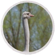 Male Ostrich Round Beach Towel
