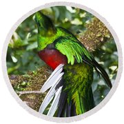 Male Resplendent Quetzal Round Beach Towel