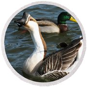 Mallard And Chinese Swan Goose - Anser Cygnoides - Featured In Wildlife Group Round Beach Towel