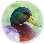 Mallard Drake In Shade Round Beach Towel