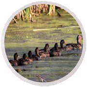 Mallard Ducks In A Row Round Beach Towel