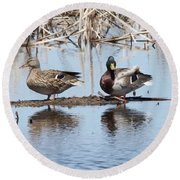Mallard Ducks Sitting On A Sandbar  Round Beach Towel