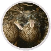 Mallard Ducks Underwater Round Beach Towel