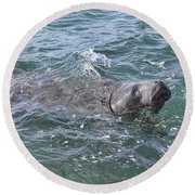 Manatee At Ponce Inlet Round Beach Towel