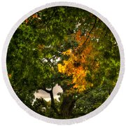 Maple In Oak Grove Round Beach Towel