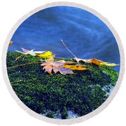 Maple Leaves On Mossy Rock Round Beach Towel
