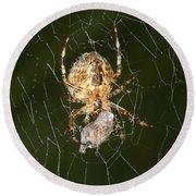 Marbled Orb Weaver Spider Eating Round Beach Towel