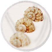 Marine Snails Round Beach Towel