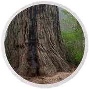 Massive Redwood And Fog Round Beach Towel