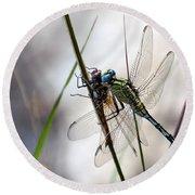 Mating Dragonflies  Round Beach Towel