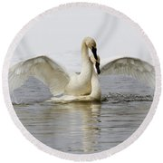 Mating Swans Round Beach Towel