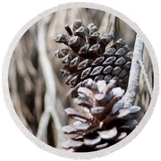 Dry Mediterranean Pinecone With Winter Colors Round Beach Towel