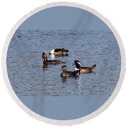 Mergansers After The Rain Round Beach Towel