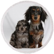 Merle Dachshund And Doxie Doddle Pup Round Beach Towel