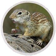 Mexican Ground Squirrel Round Beach Towel