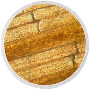 Micrograph Of A Goldfish Tail Round Beach Towel