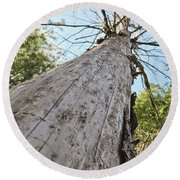Mighty Tree And The Bark Beetle Round Beach Towel