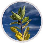 Milkweed Pods Against A Blue Sky Background Round Beach Towel