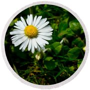 Miniature Daisy In The Grass Round Beach Towel