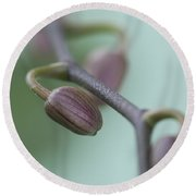 Misty Orchid Buds Round Beach Towel