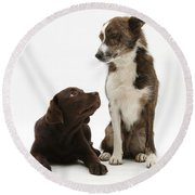 Mixed Breed And Chocolate Lab Round Beach Towel