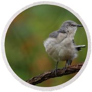 Mocking Bird Perched In The Wind Round Beach Towel
