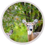 Mom And Baby Deer Round Beach Towel