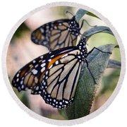 Monarch Butterflies  Round Beach Towel