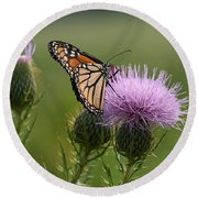 Monarch Butterfly On Bull Thistle Wildflowers Round Beach Towel