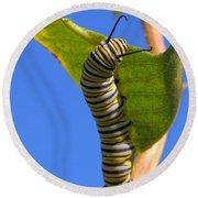 Monarch Caterpillar Round Beach Towel
