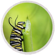 Monarch Caterpillar  Round Beach Towel