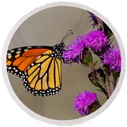 Monarch Round Beach Towel by Mircea Costina Photography